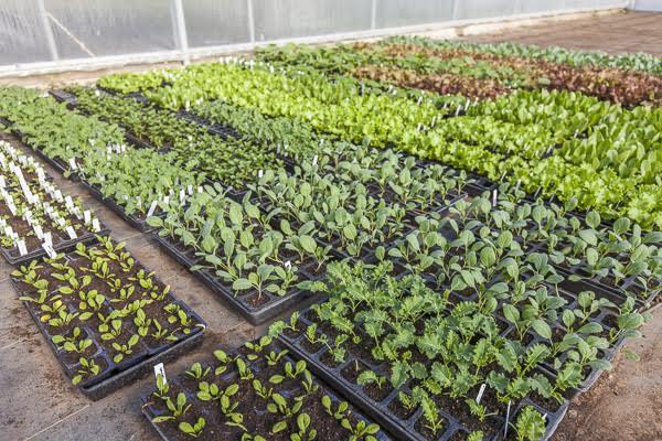 Organic Backyard Gardening Workshop Johnsons Backyard Garden
